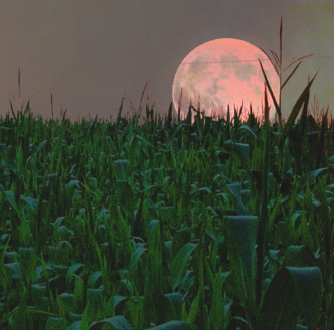 Moon rising up in background behind grass