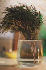 Single pine branch in a glass of water