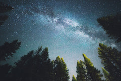 blue night sky filled with stars and pine trees