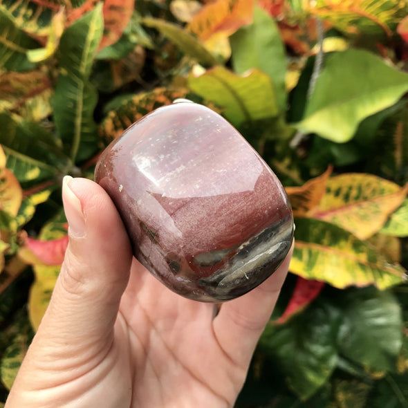 Red toned Polished Petrified Wood gemstone