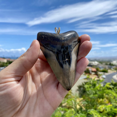 Fossil Megalodon Tooth Pendant - STFP01