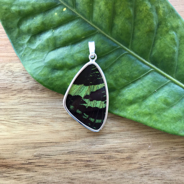 Large Butterfly Wing Pendant