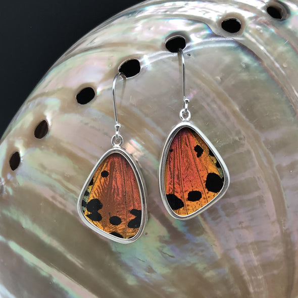 butterfly, butterfly jewelry, butterfly wings, sterling silver, earrings