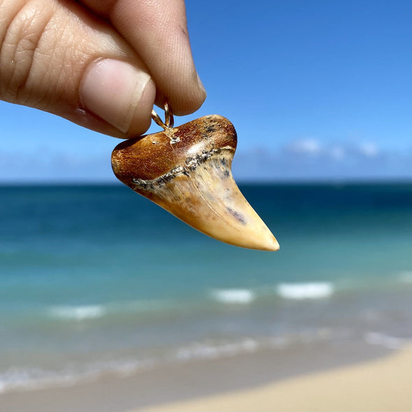 Golden Fossil Mako Tooth Pendant - STFP36