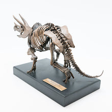 Bronze Triceratops Sculpture