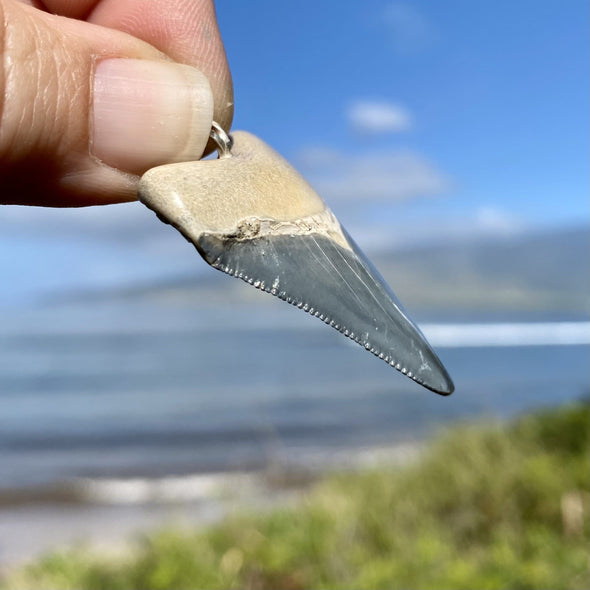 Bone Valley Megalodon Tooth Pendant - BVP-1