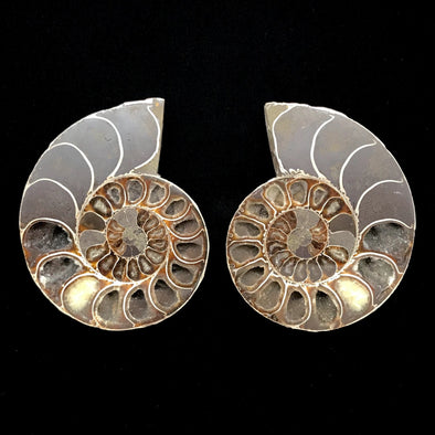 "5"" Ammonite Fossil Split Pair"