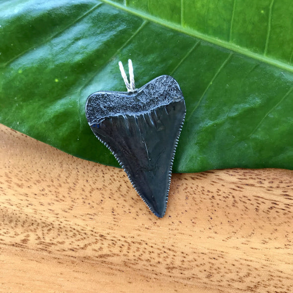 Great White Fossil Tooth Pendant 2