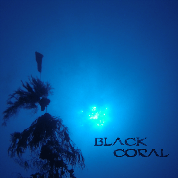 Black Coral Movie DVD