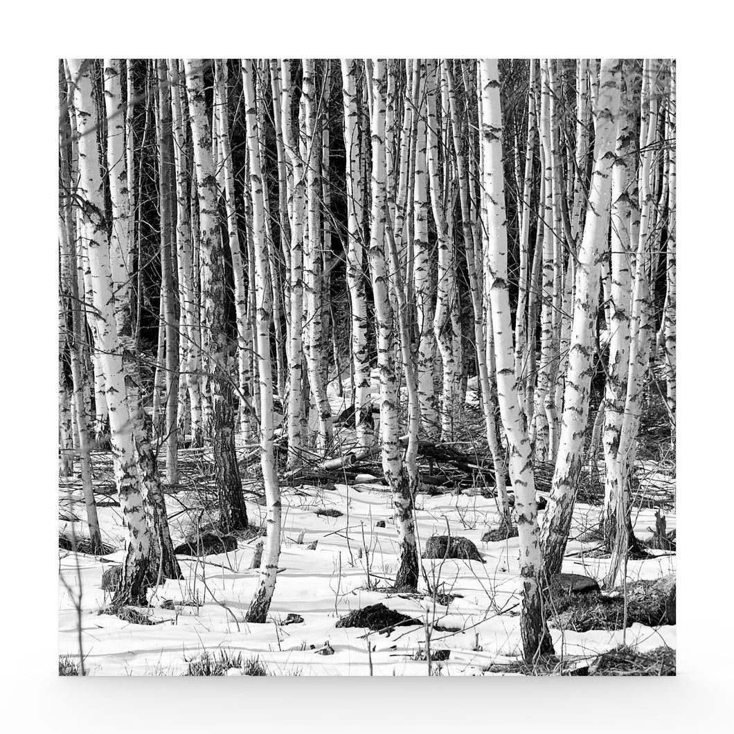 White forest canvas