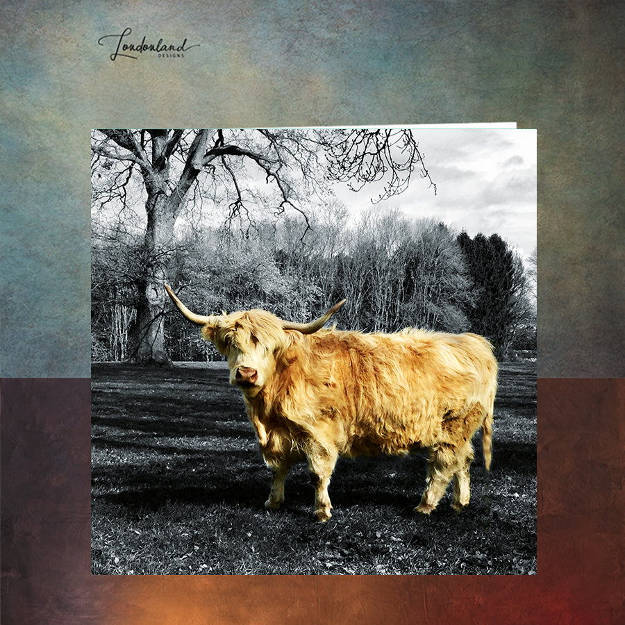 Blonde Moo Scottish Highland Cattle Greeting Card