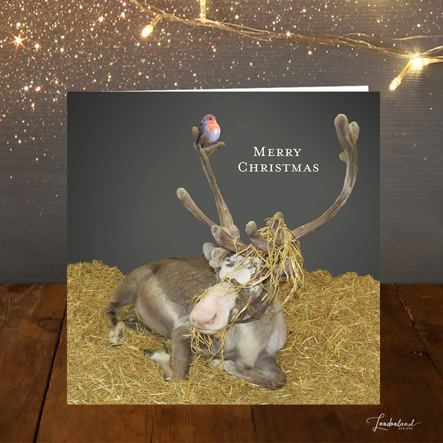 Rudolphs Straw Hat  Christmas Card
