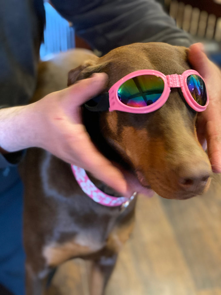 Doggie Google/Sunglasses