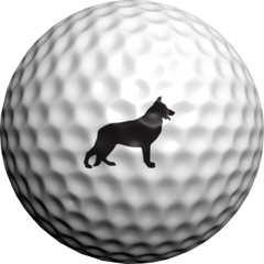 German Shepherd  - Golfdotz