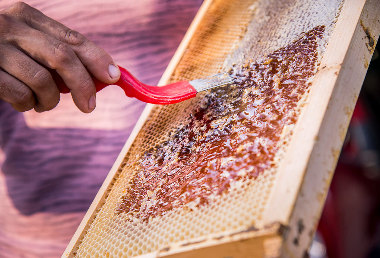Artisan Scraping Honey Off Bee Hive