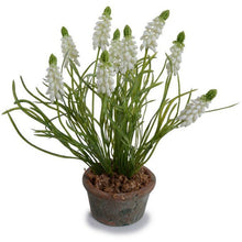 Load image into Gallery viewer, Grape Hyacinth Pot