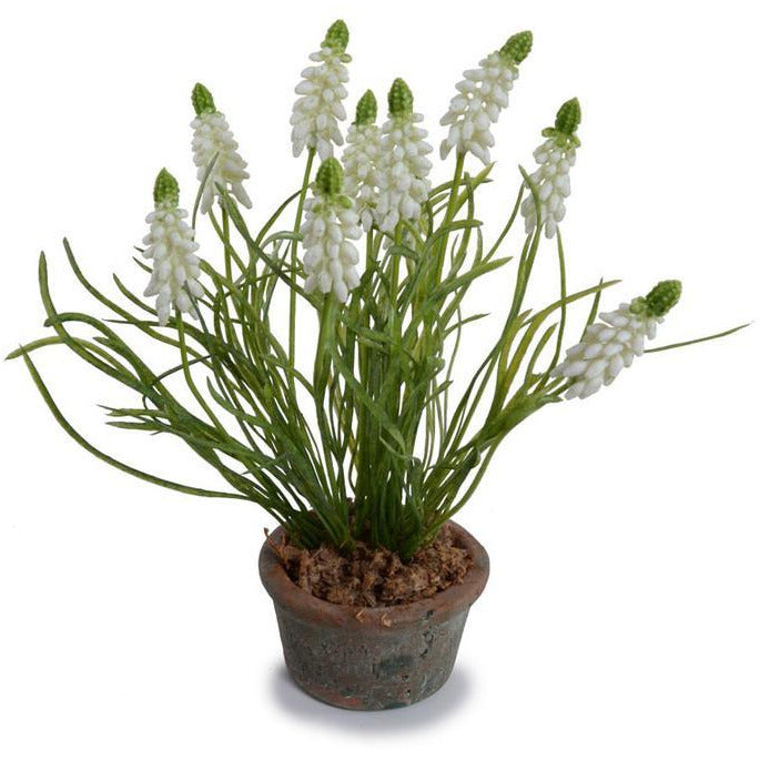 Grape Hyacinth Pot