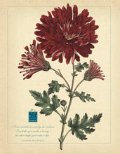 Load image into Gallery viewer, Botanical Posters