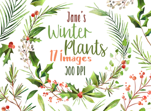 Winter Plants Graphics Set