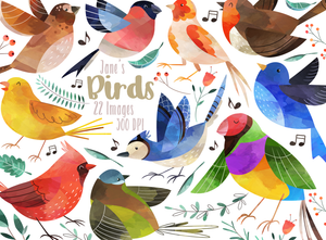 Birds Graphics Set