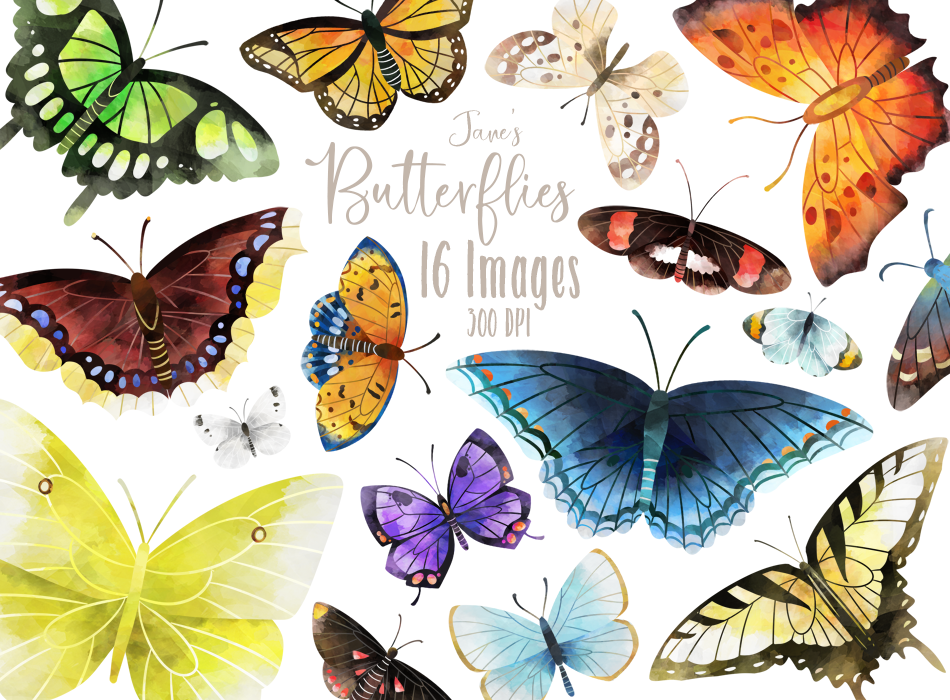 Butterfly Graphics Set