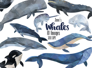 Whale Graphics Set