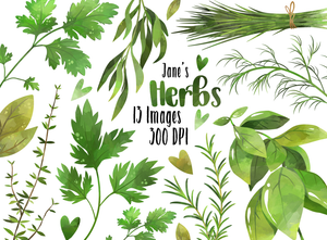 Culinary Herbs Graphics Set