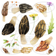Morels Graphics Set