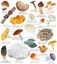 Wild Edible Mushrooms Graphics Set