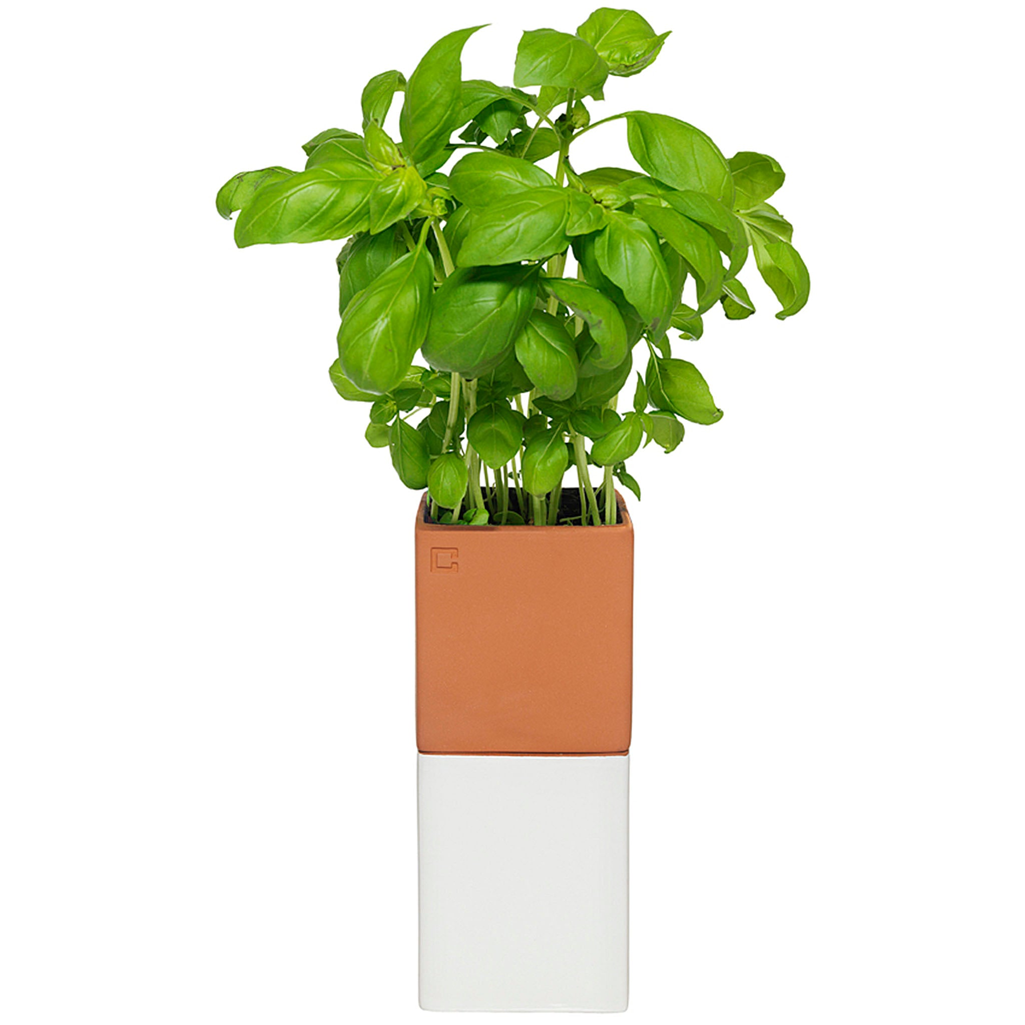 Evergreen is a self-watering pot which is ideal for anyone who doesn't have a green thumb or who has other priorities. The Evergreen is designed to keep herbs fresher and more delicious in just a few days.
