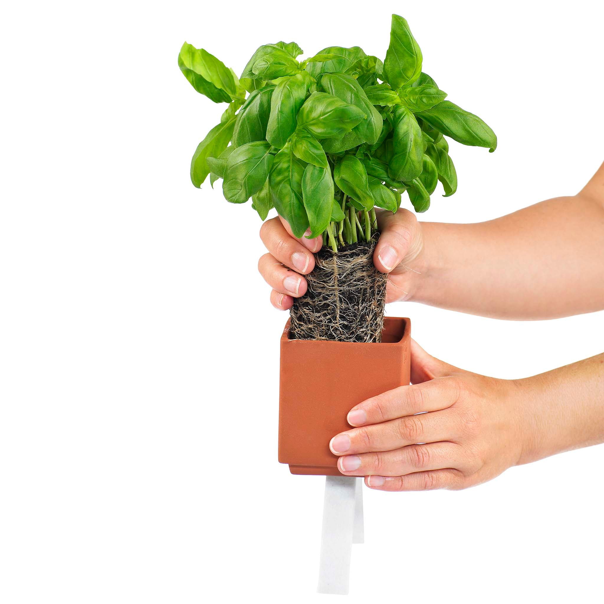 A felt pad draws water from the lower section, maintaining moisture for the plant from below at the ideal rate.