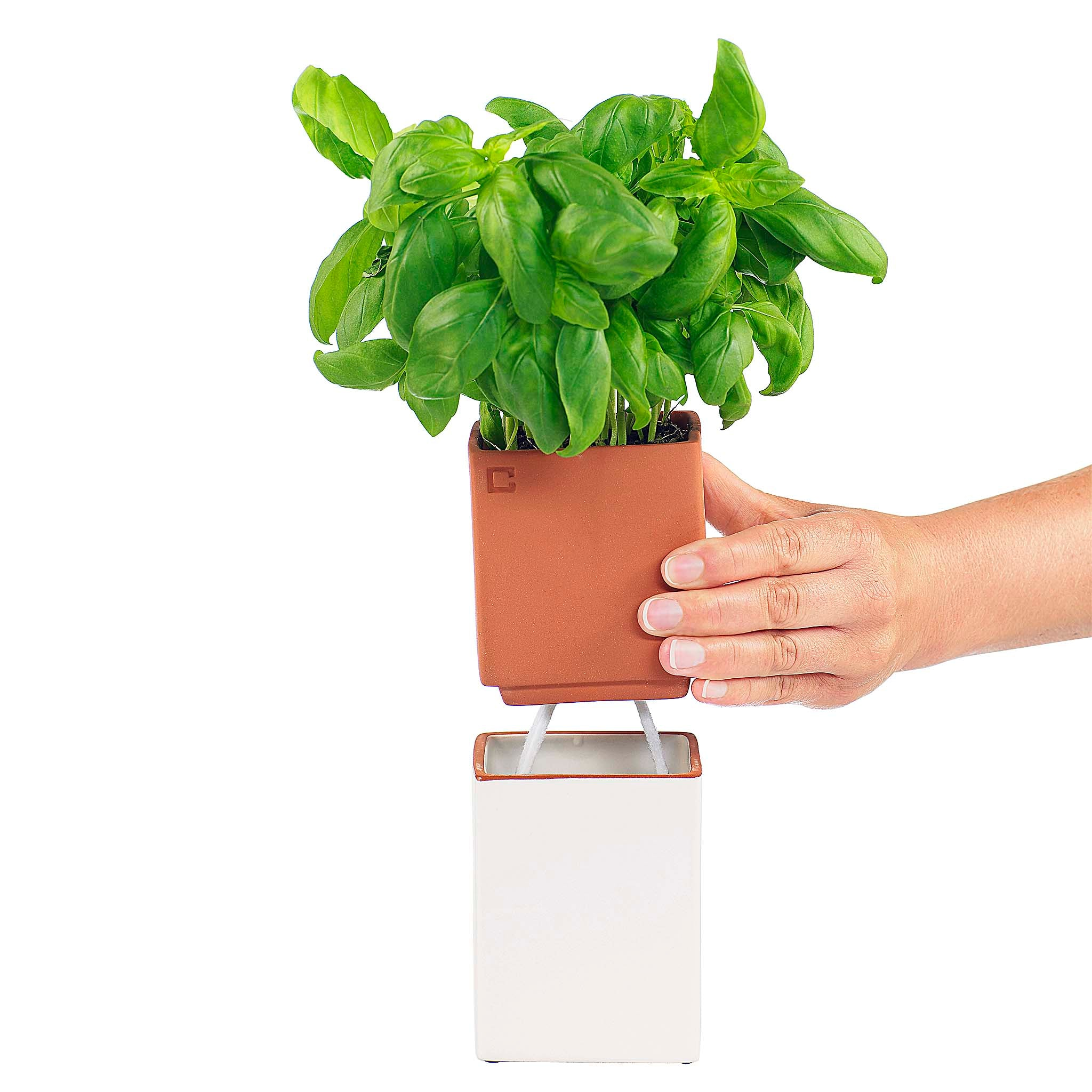 Thanks to the Evergreen, you'll find it easier to keep aromatic greens at hand when standing in front of the stovetop.