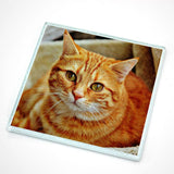 Personalised glass photo coaster with a photo of a cat printed on it