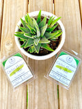 Cactus Flower & Jade Soy Wax Melts