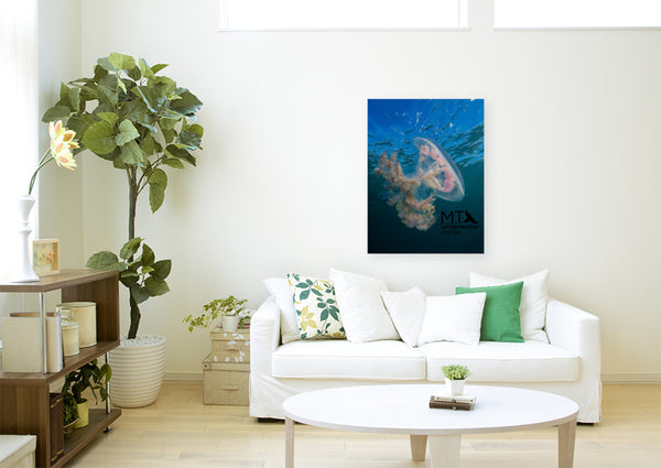 Haekel's Jellyfish - Canvas