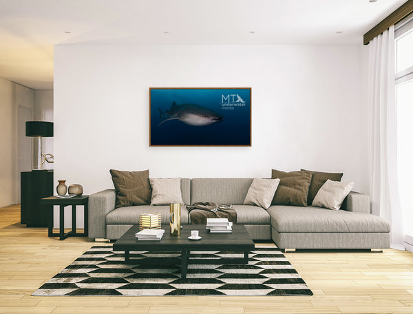 The Young Whale Shark - Wood Framed Canvas