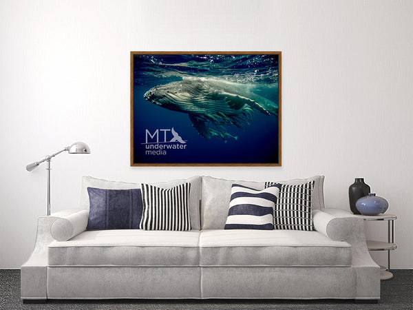 The Humpback Whale Calf - Wood Framed Canvas