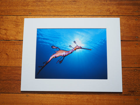 Seadragon Under The Sun - Matted Print