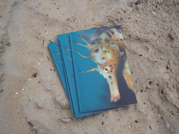 Seahorse, Portraits from the Victorian Ocean. 50 page full colour book.