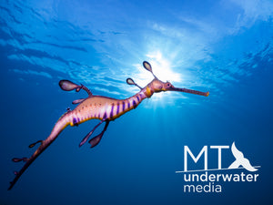 Seadragon Under The Sun 1 - Wood Framed Canvas