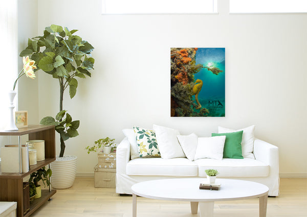 Seahorse Sunset - Canvas
