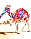 Carmen the Camel Stretched Canvas