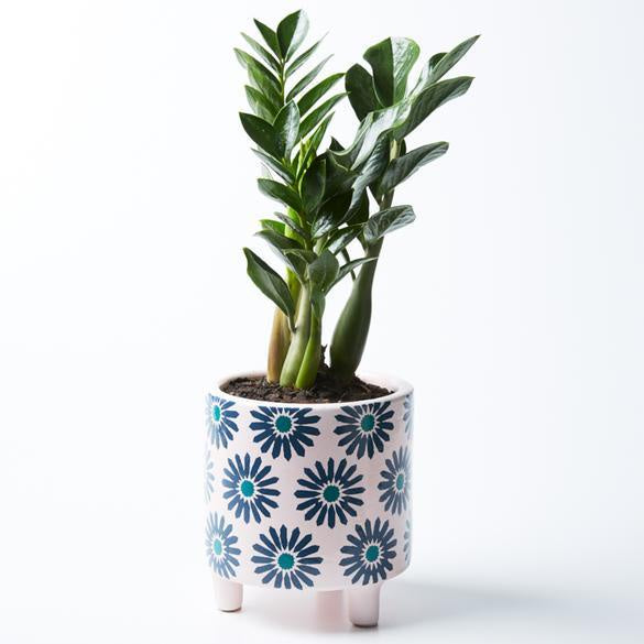 Shop Liberty Pot | Pink at Rose St Trading Co
