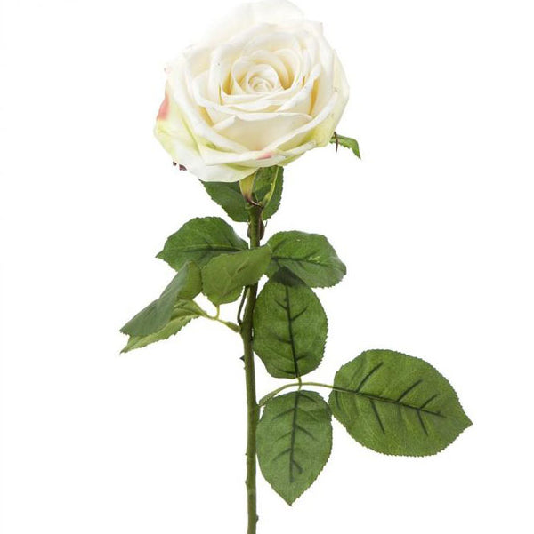 Shop Cabbage Rose 65cm White at Rose St Trading Co