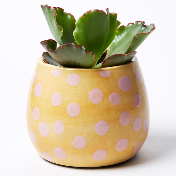 Shop Pink Dot Planter at Rose St Trading Co