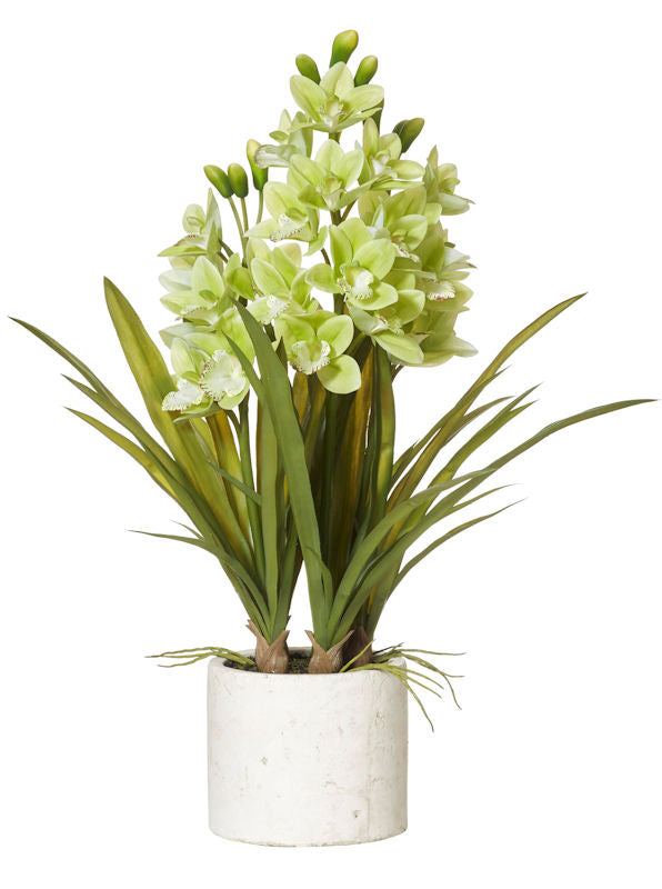Shop Cymbidium Orchid Stone Pot- Green at Rose St Trading Co