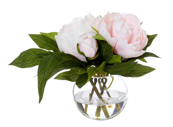 Shop Peony in Sphere Vase- Pink at Rose St Trading Co