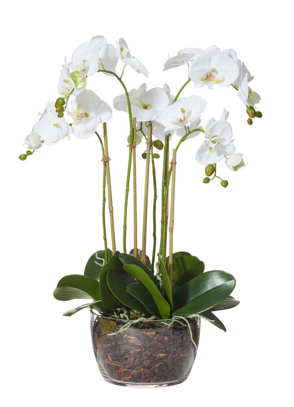 Shop Phalaenopsis Classic Bowl 68cm at Rose St Trading Co