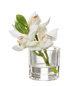 Shop Cymbidium Orchid White | Glass Vase 15cm at Rose St Trading Co