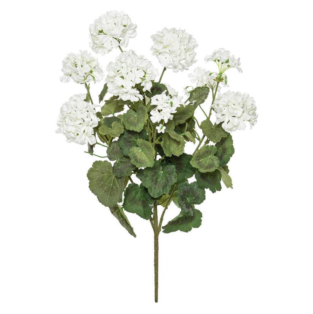 Shop Geranium Bush | Large at Rose St Trading Co